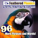 Feathered Phonics CD Vol. 4 Phrases and Words to teach pet birds