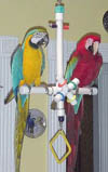 Parrot Party Large T-Toy Forever Bird Toy