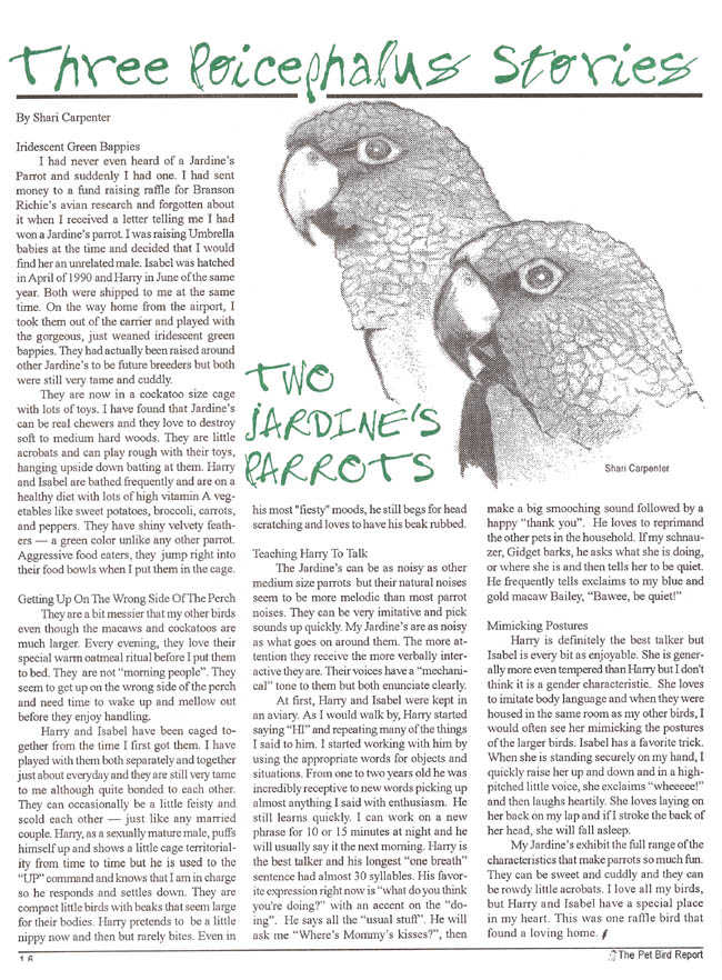 Two Jardine's Parrots article